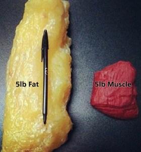 筋肉と脂肪は別物