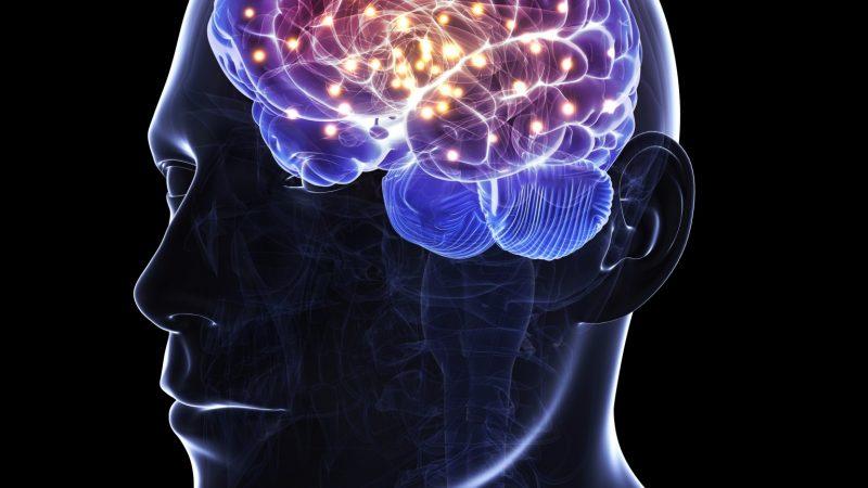 脳にも効く
